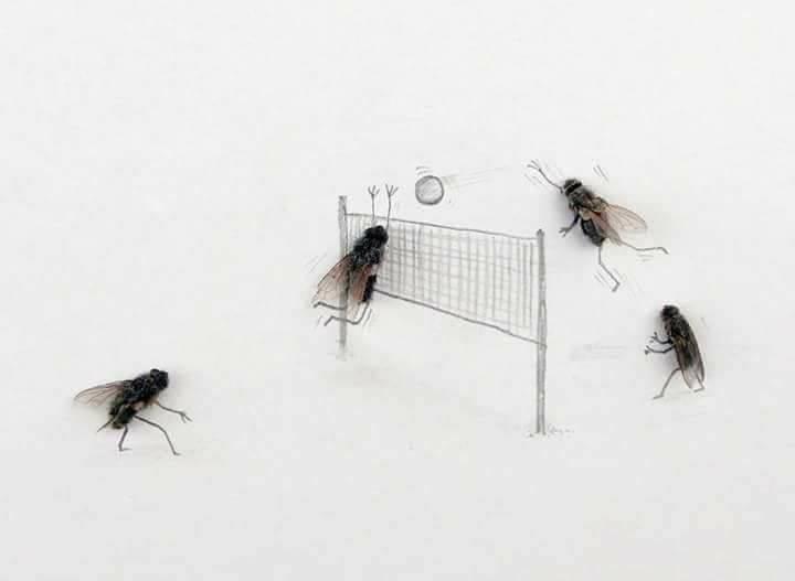 الذباب يلعبون الكرة الطائرة