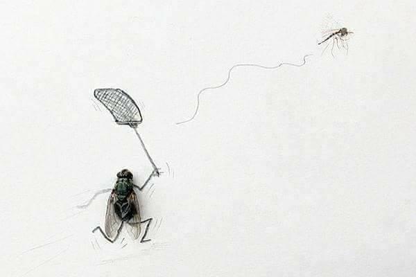 ذبابة تطارد ناموسة