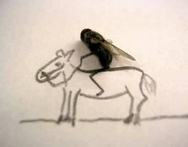 الرسم بالذباب