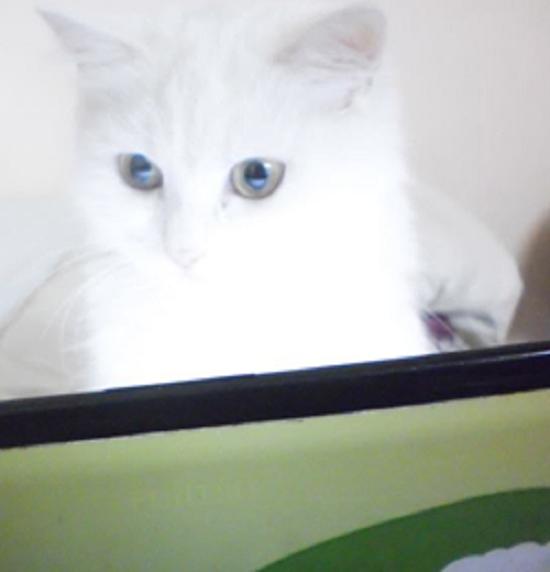 قطة سارة
