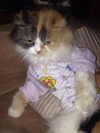 قطة سمر