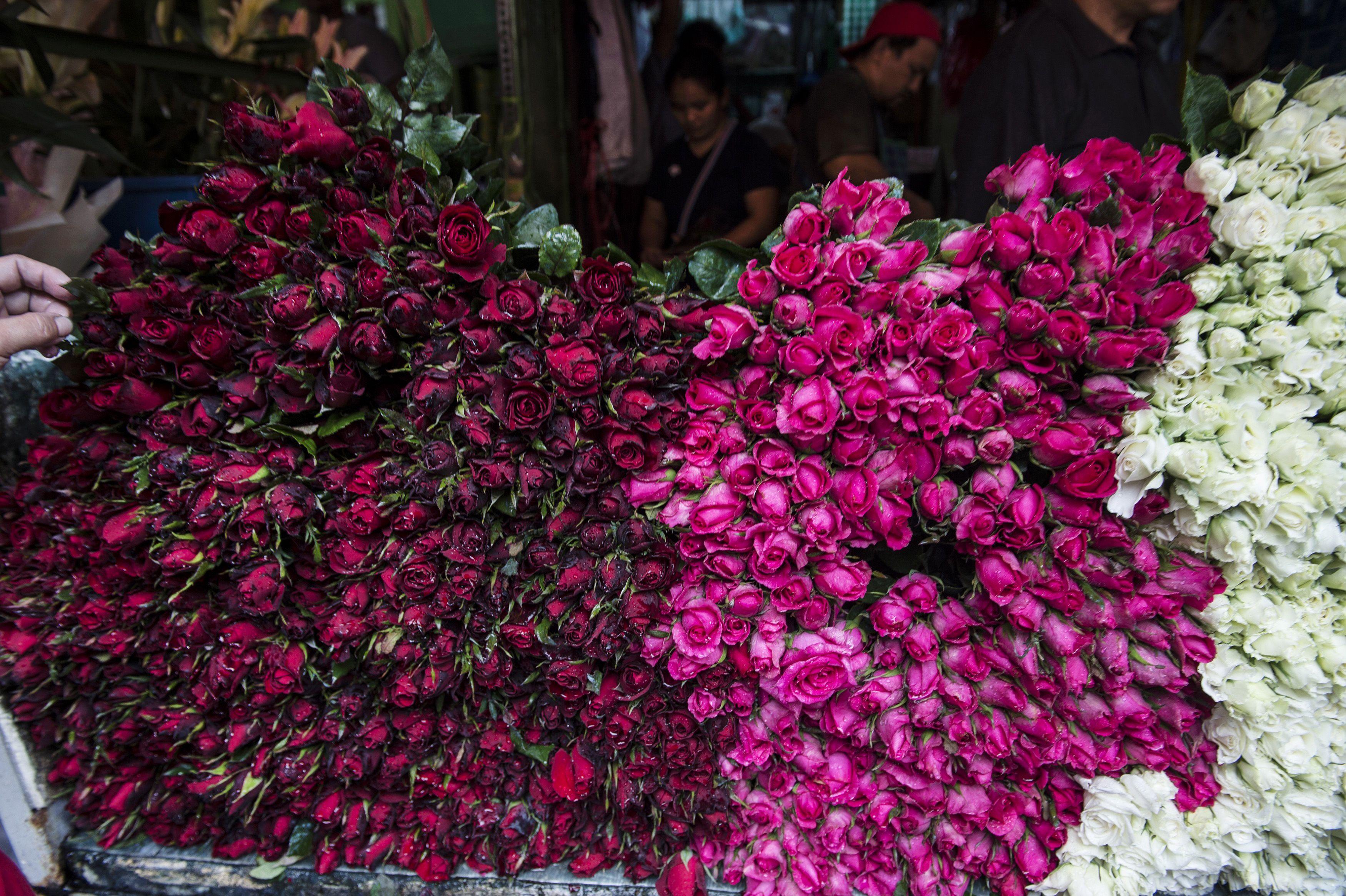 الورود الحمراء فى الفلبين