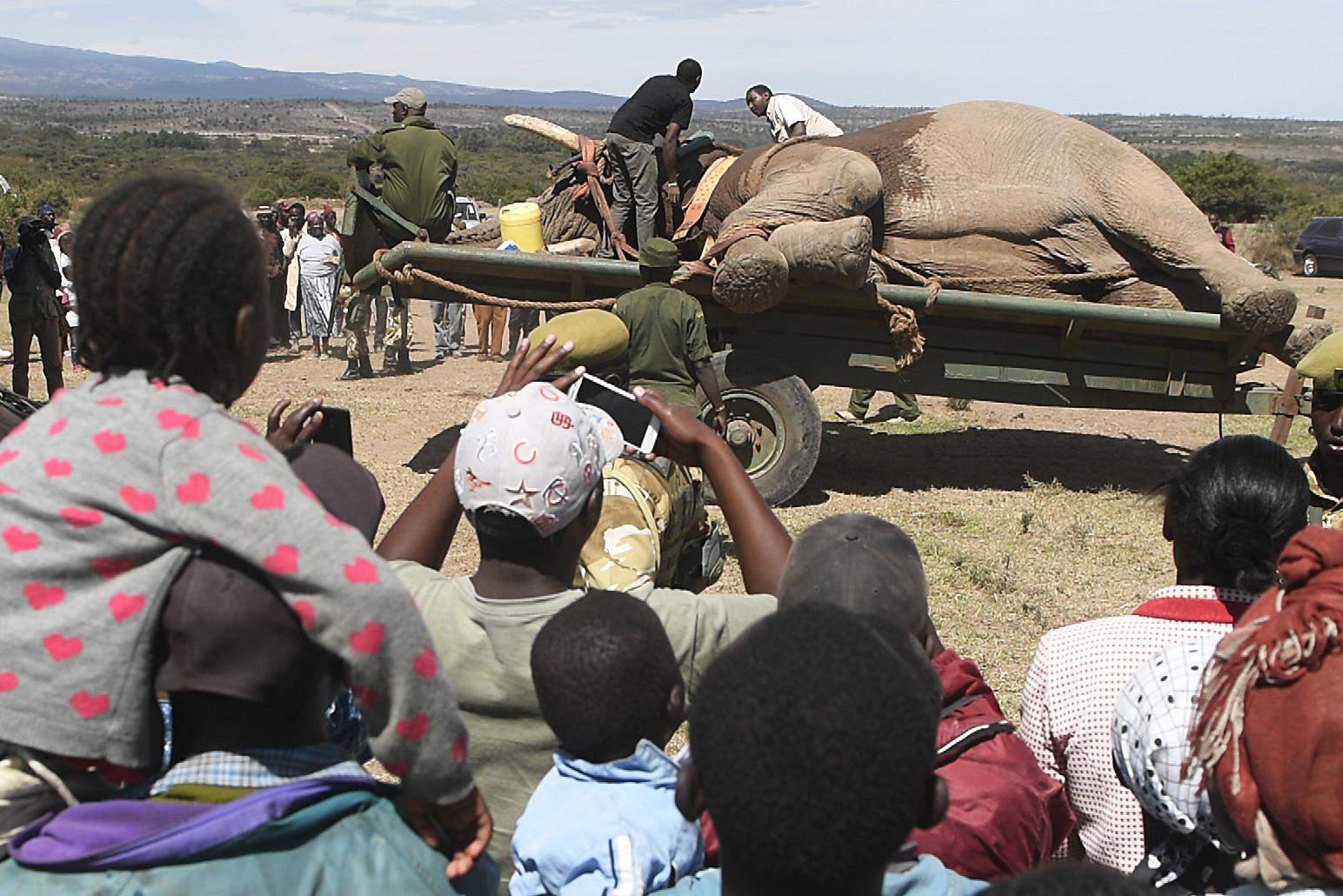 الفيل علي عربة