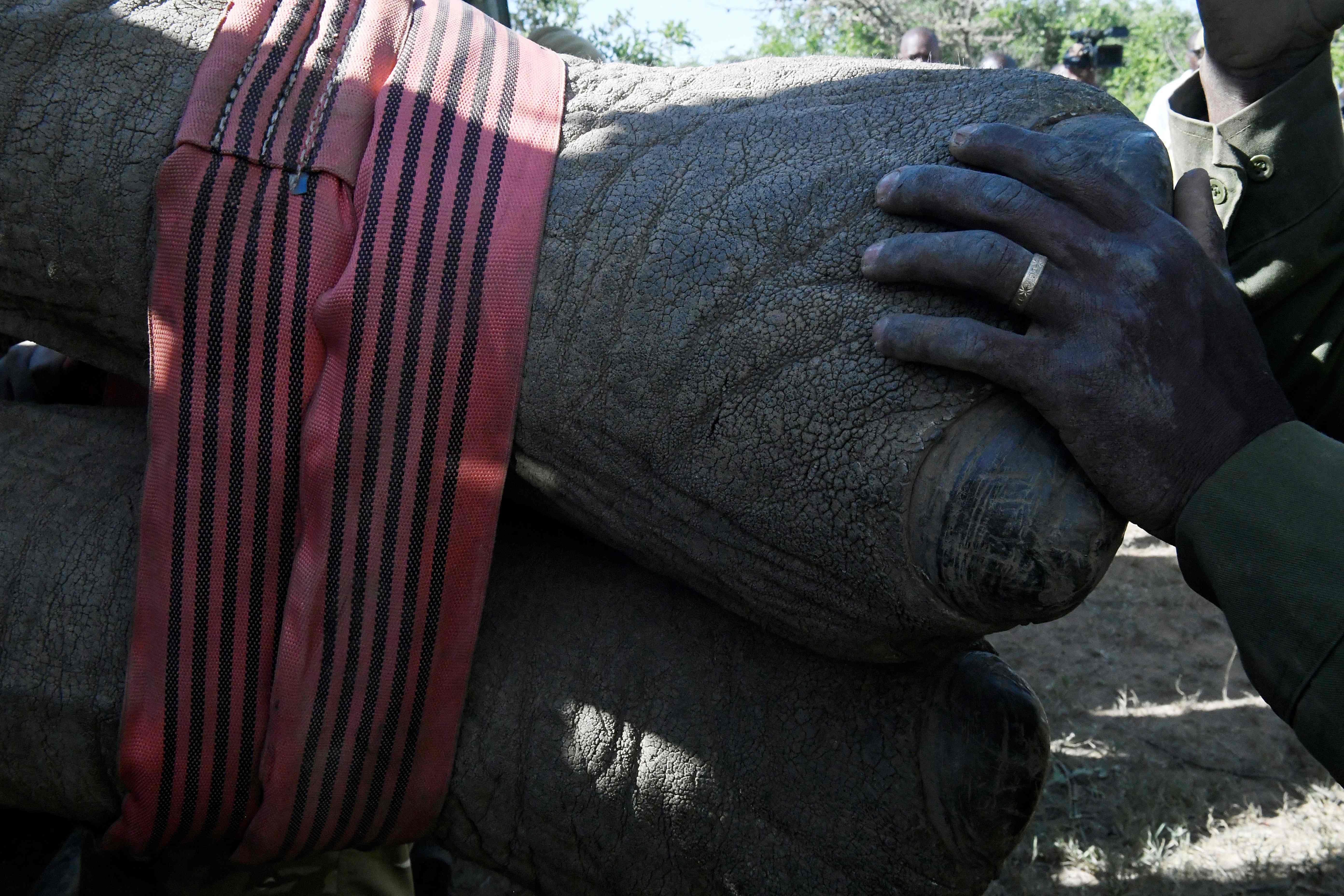 أقدام فيل