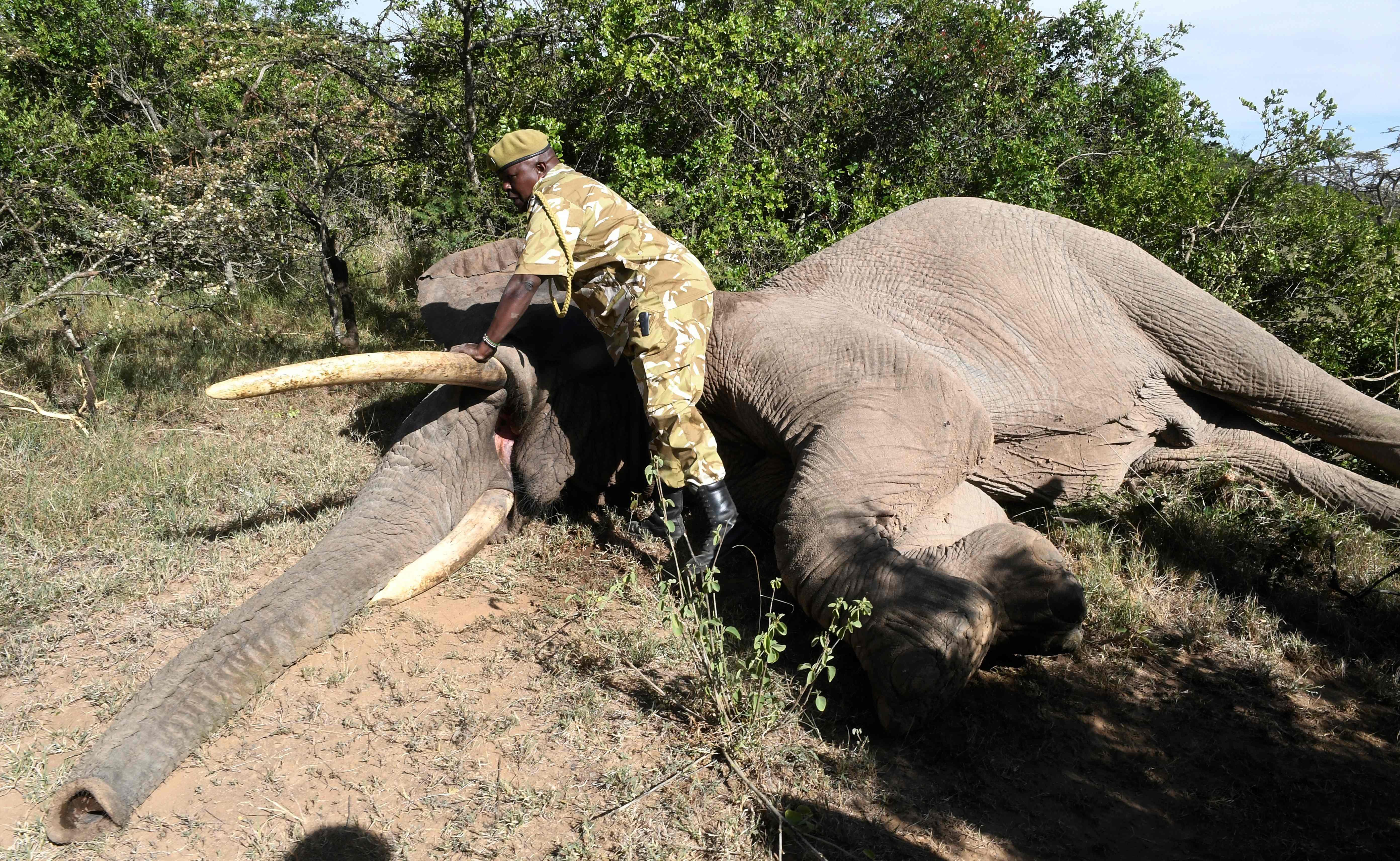 تخدير الفيله