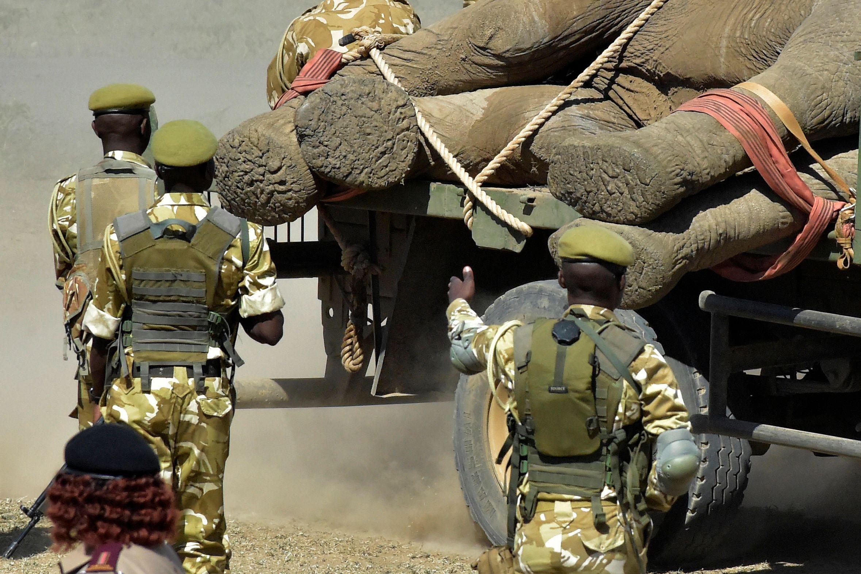 حراسة الفيلة