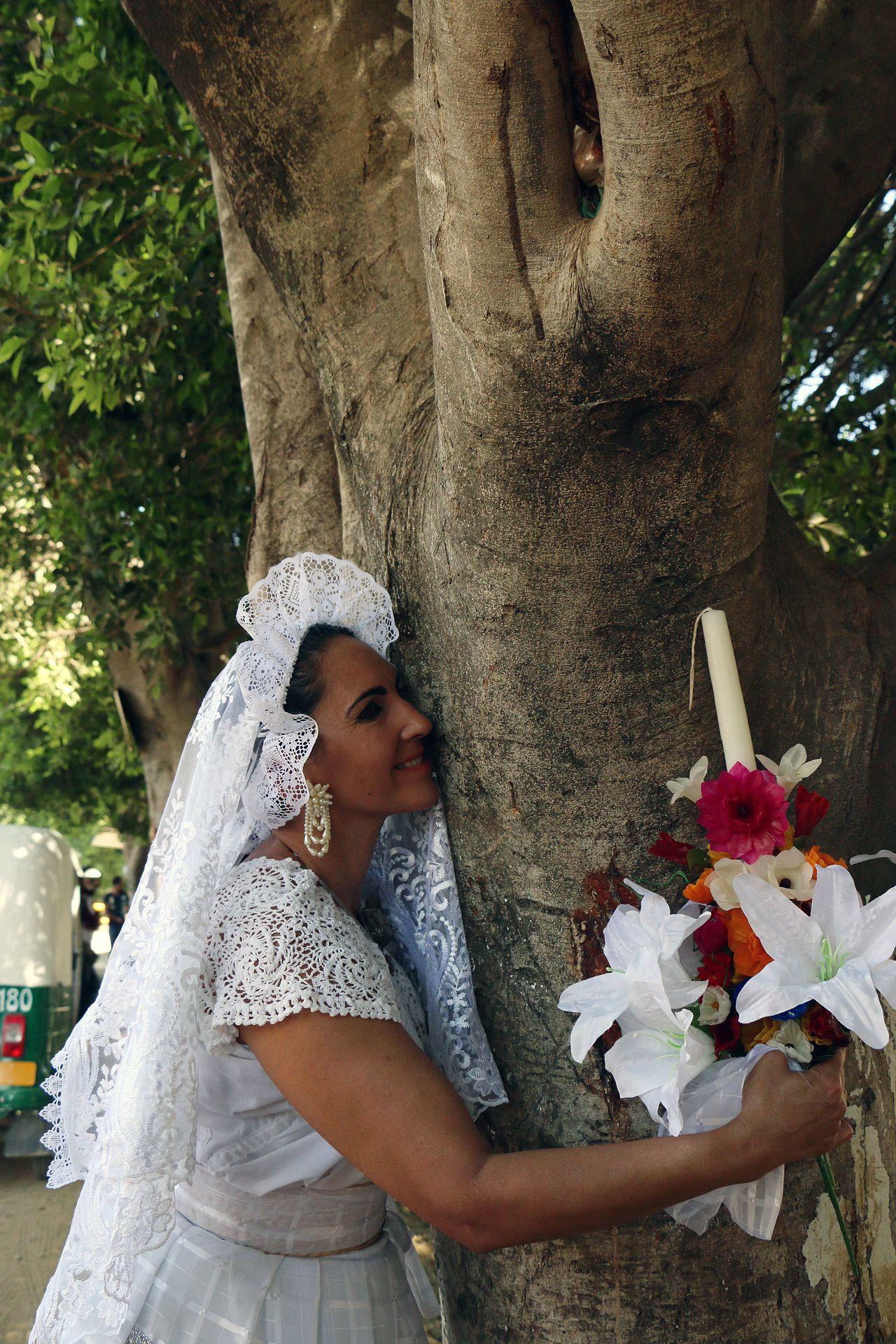 عناق الاشجار في المكسيك