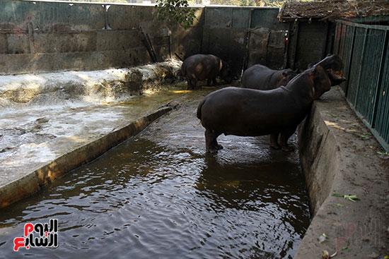 حديقة حيوان الجيزة (5)