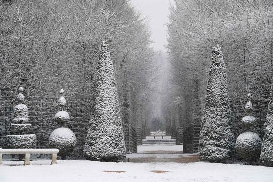 الثلوج تغطى الأشجار فى فرنسا