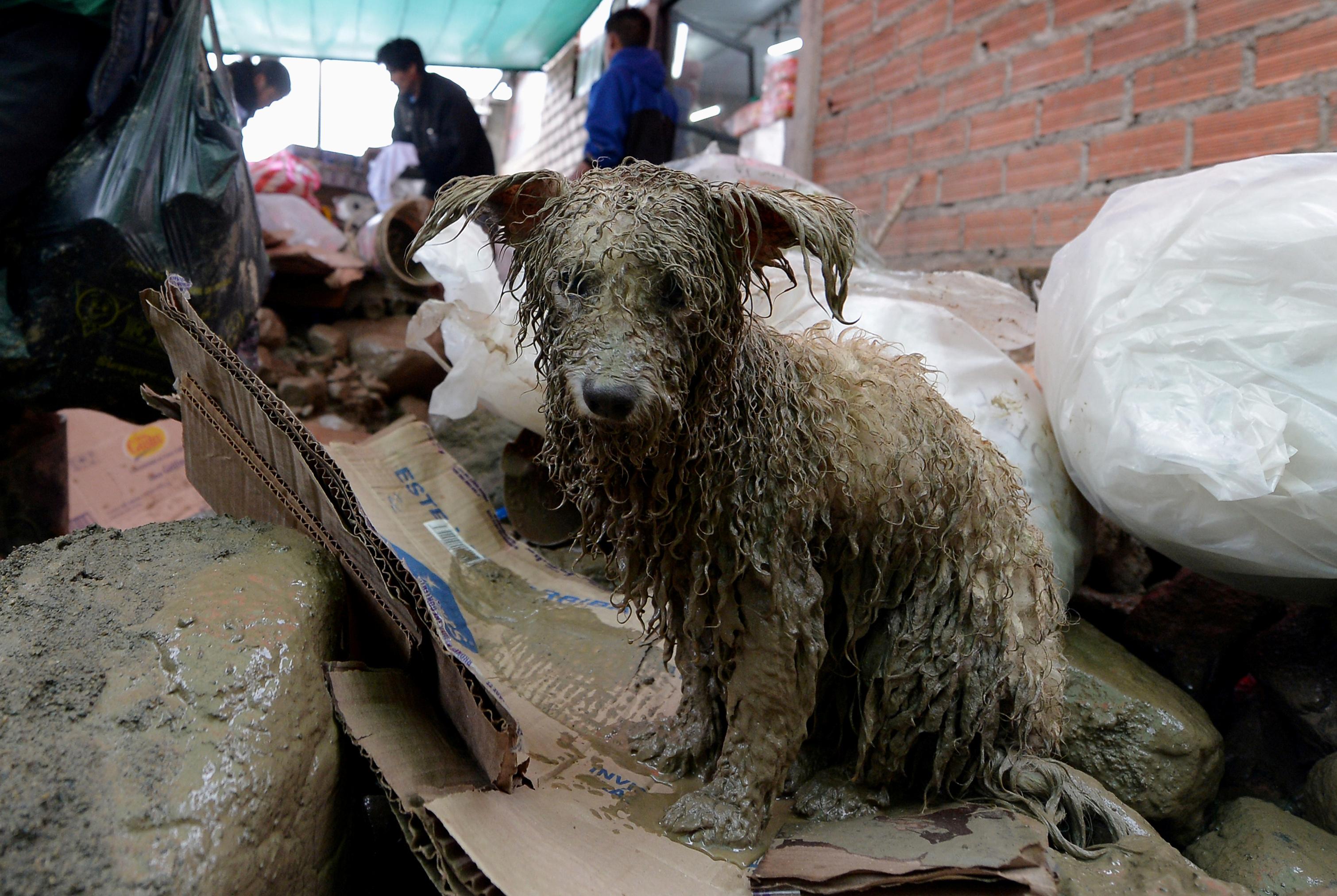 كلب بعد إنقاذه