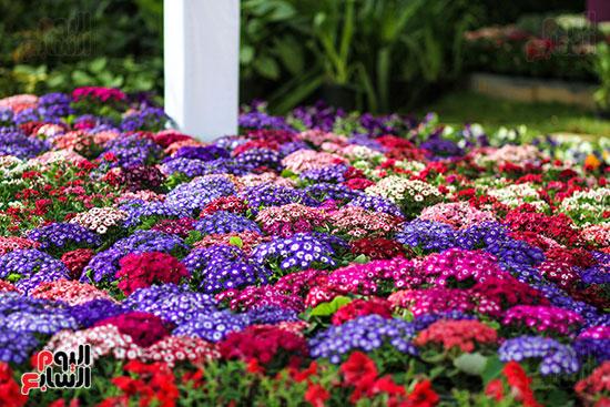 معرض زهور الربيع (1)