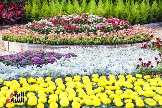 معرض زهور الربيع (7)