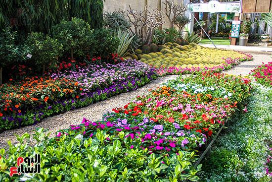 معرض زهور الربيع (3)