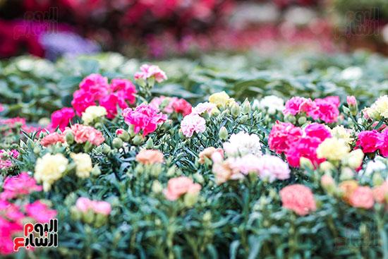 معرض زهور الربيع (9)