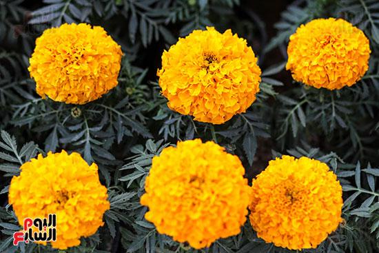 معرض زهور الربيع (10)