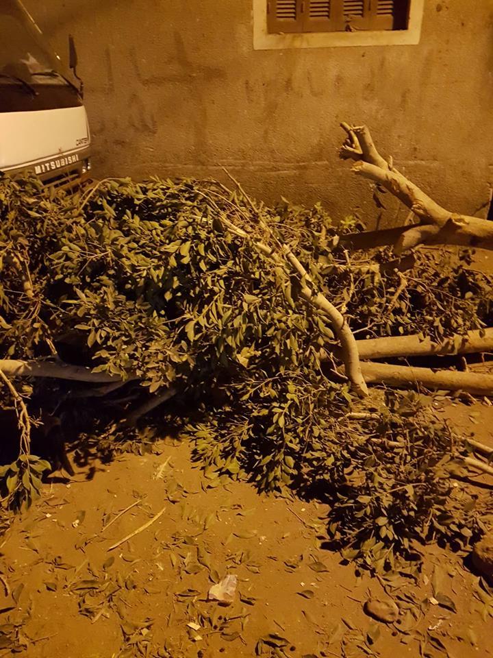 تقطيع الأشجار بمركز ميت أبو الكوم