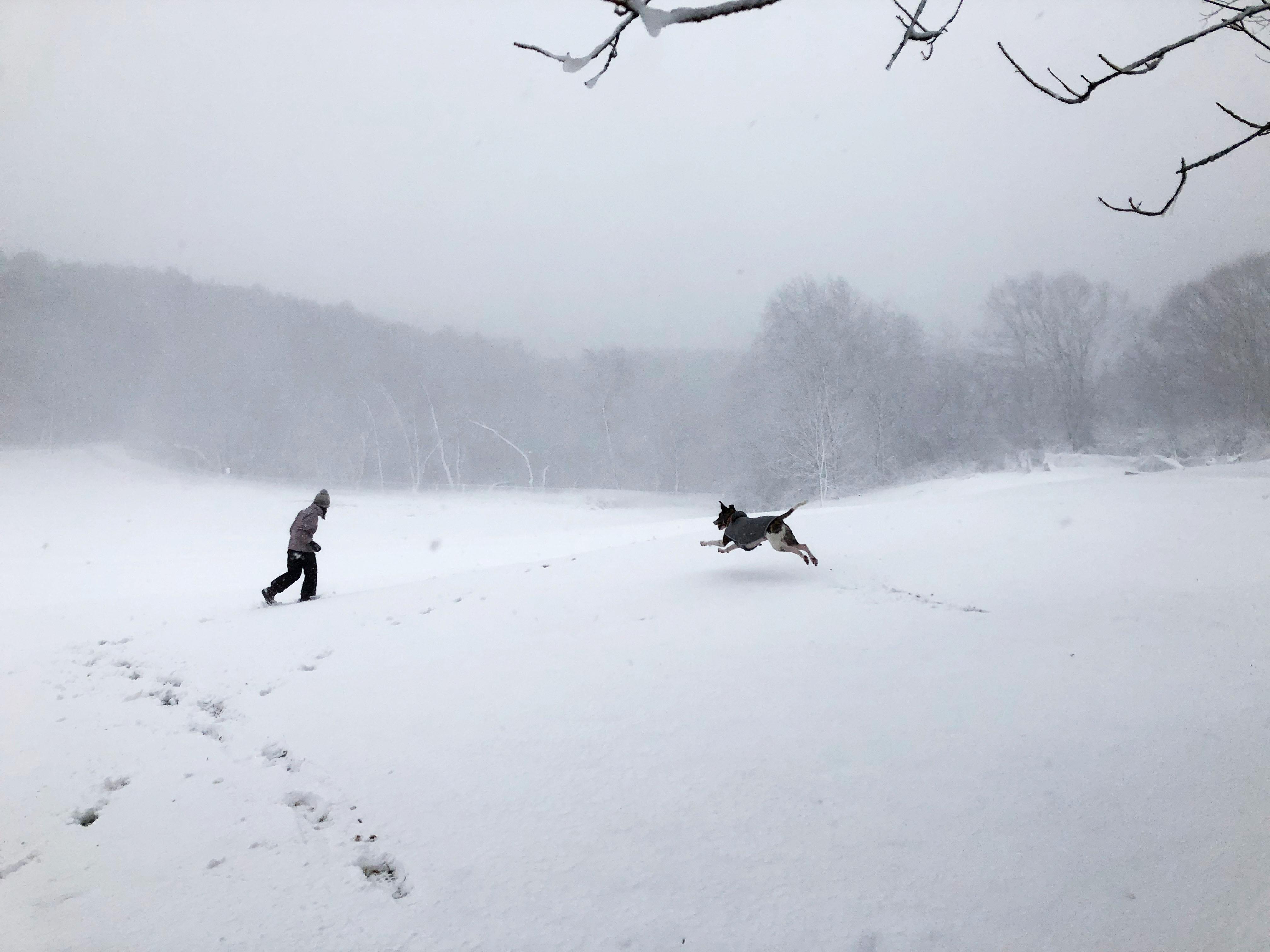 تساقط كثيف للثلوج
