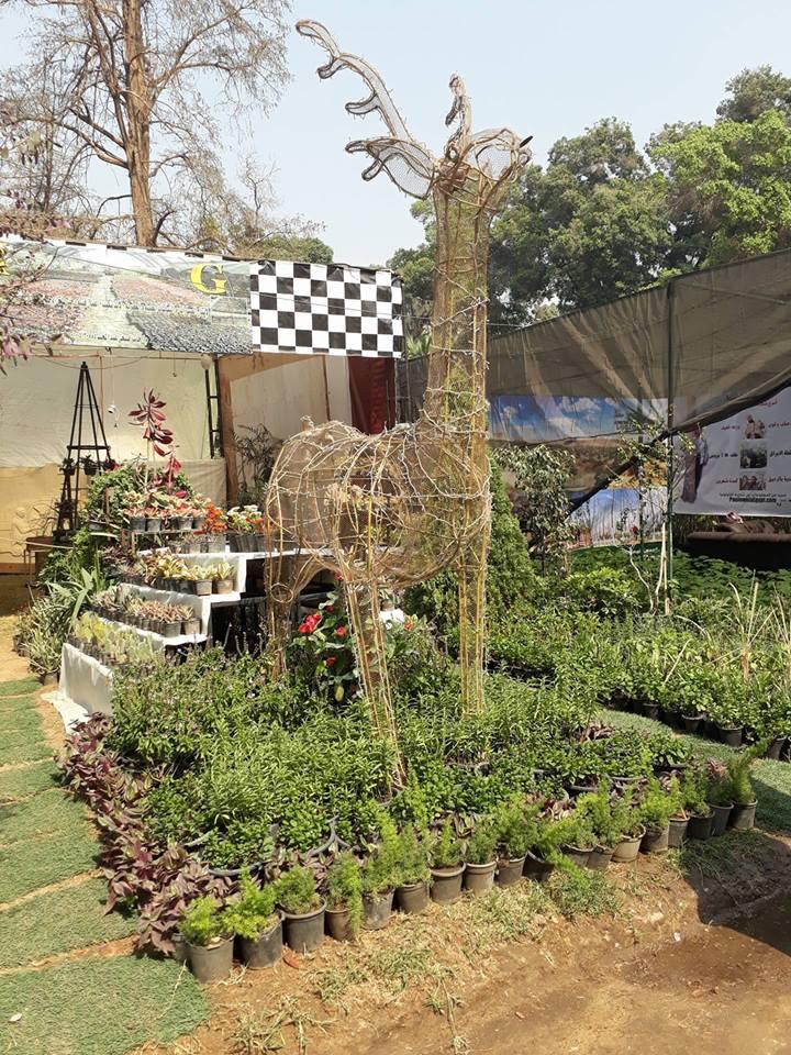 زوار معرض الزهور (10)