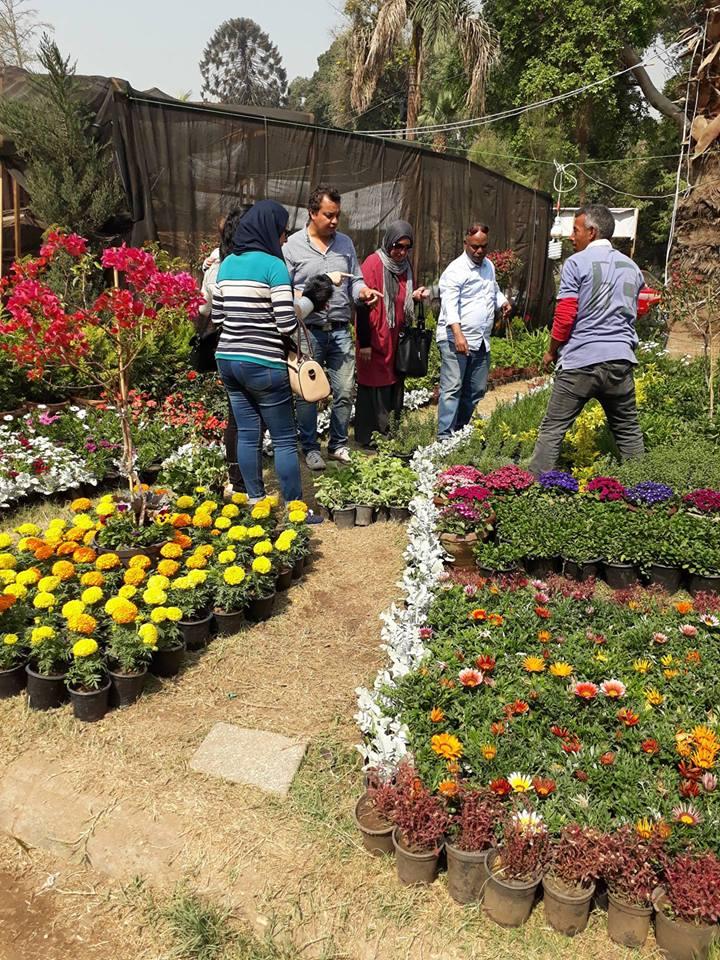 زوار معرض الزهور (9)