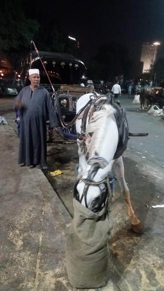 4 خلف محمد
