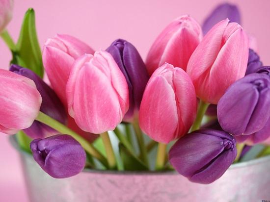 اهدي الورد المناسب للبرج المناسب..مسابقة