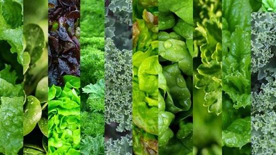 خضروات ورقية