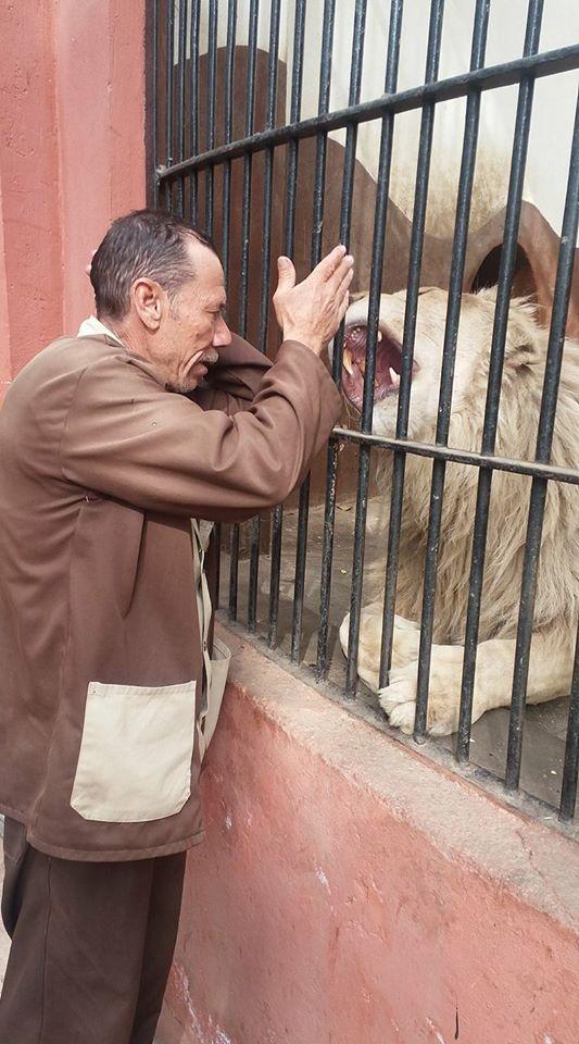 الأسد يتفاعل مع صاحبه