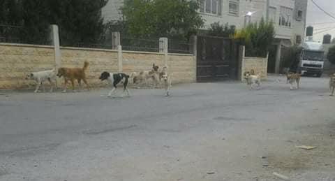 الكلاب فى الشارع