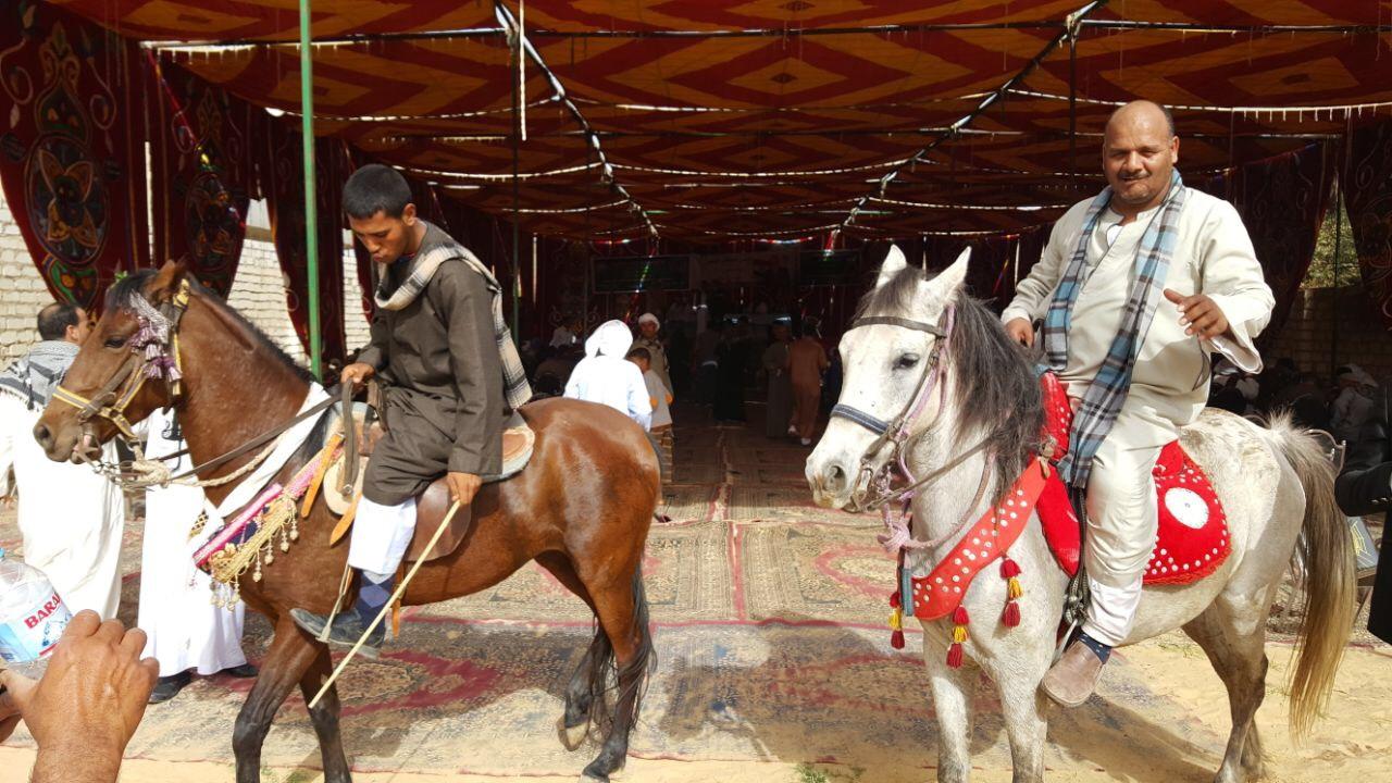 استعراضات الخيول فى مؤتمر دعم موسى مصطفى موسى