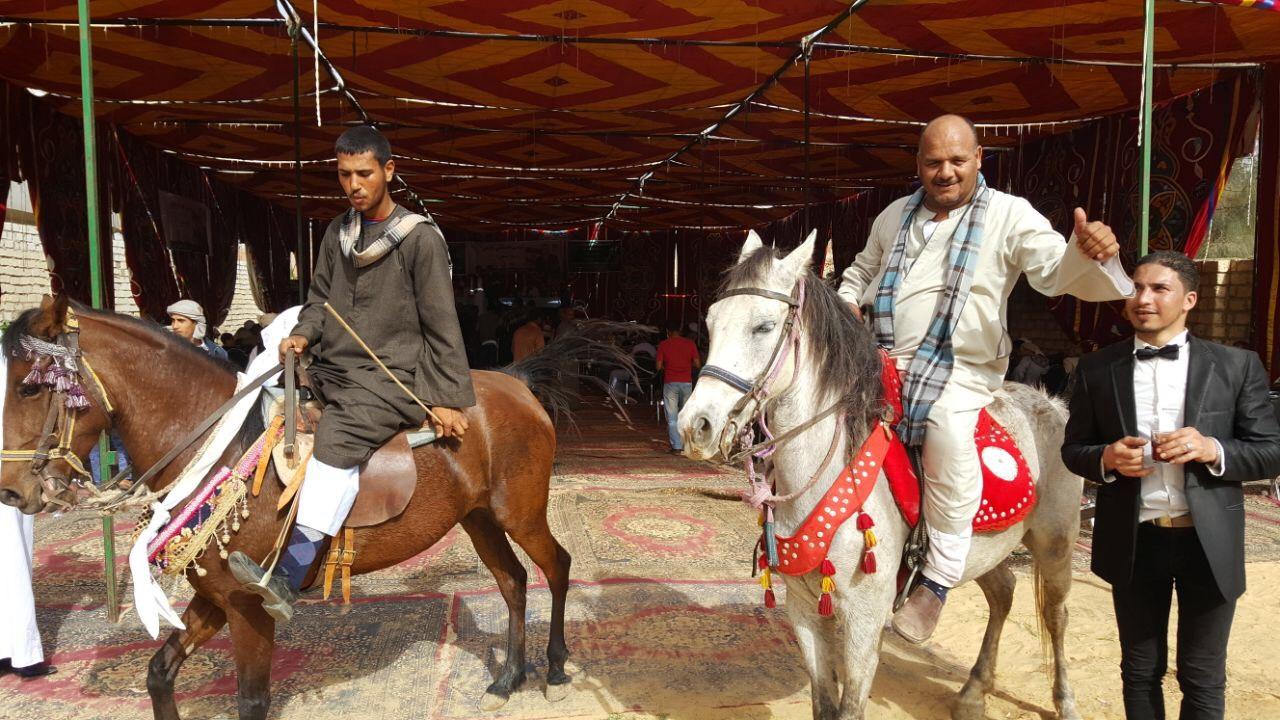 الخيول أمام مقر مؤتمر دعم المرشح الرئاسى موسى مصطفى موسى