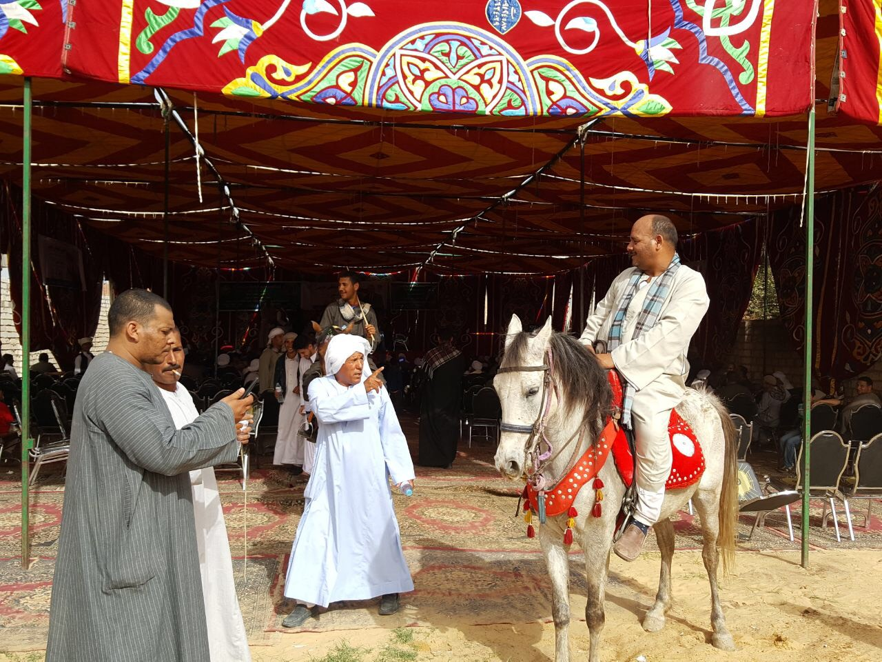 الخيول فى واجهة مؤتمر المرشح الرئاسى موسى مصطفى موسى