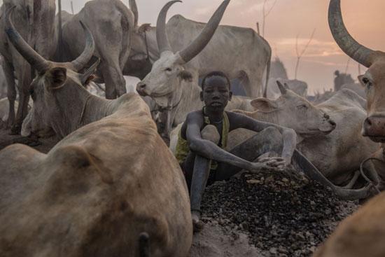 معسكرات-لرعاية-الماشية