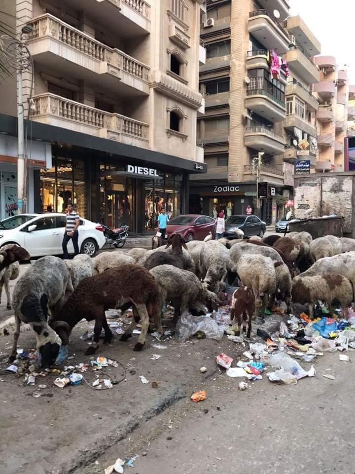 انتشار القمامة بشارع طلبة عويضة (5)
