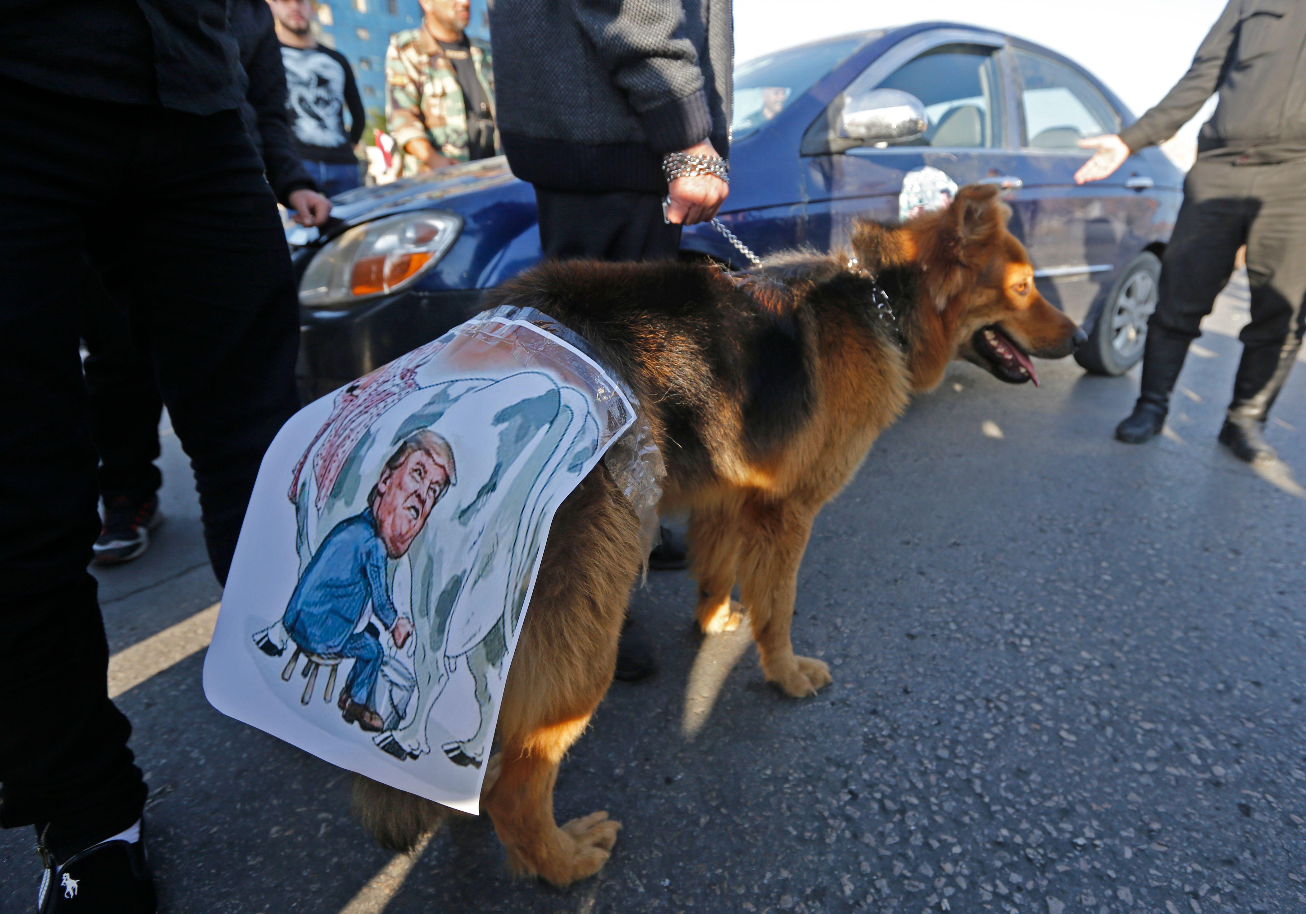 وضع صورة الرئيس الأمريكى على كلب