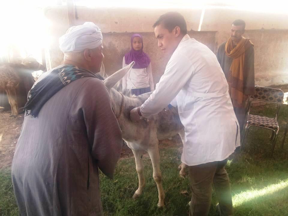 قافلة بيطرية للكشف على الحيوانات بسوهاج (2)