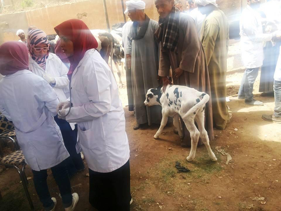 قافلة بيطرية للكشف على الحيوانات بسوهاج (1)