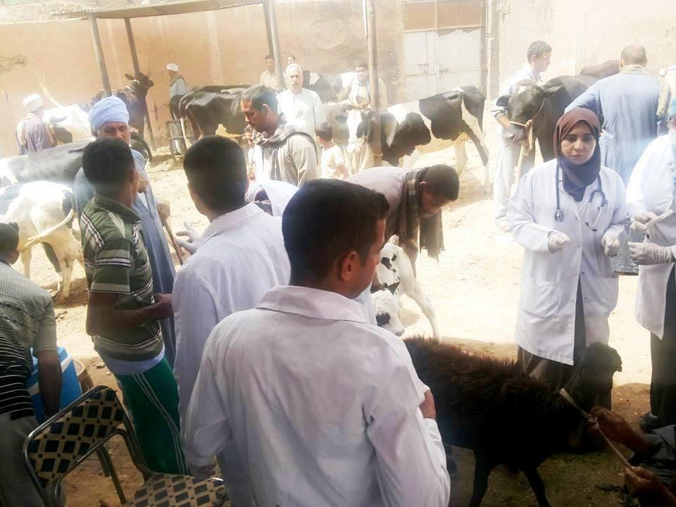 قافلة بيطرية للكشف على الحيوانات بسوهاج (3)