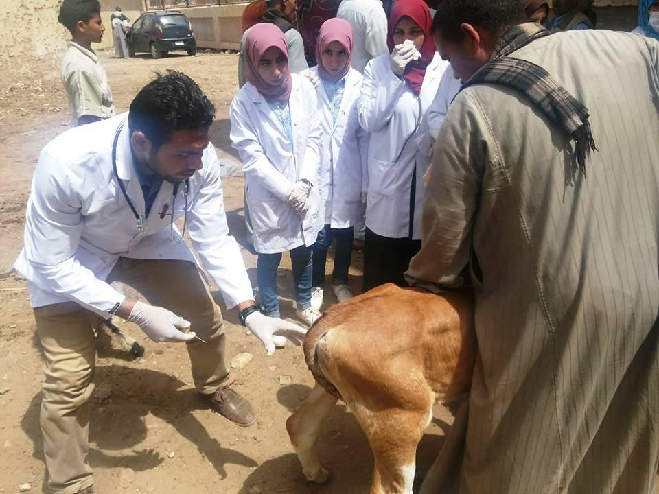 قافلة بيطرية للكشف على الحيوانات بسوهاج (6)