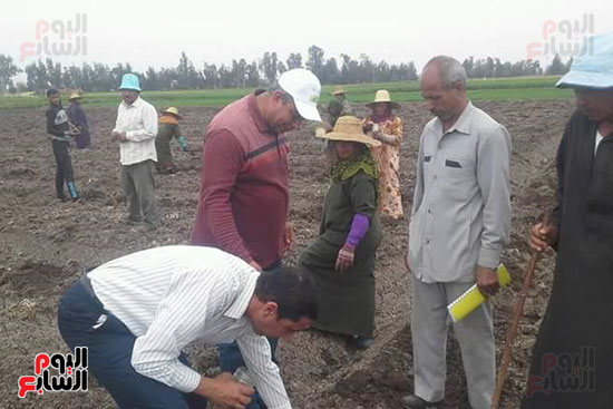 زراعة-محصول-اليقطين-لأول-مرة-في-مصر-(2)