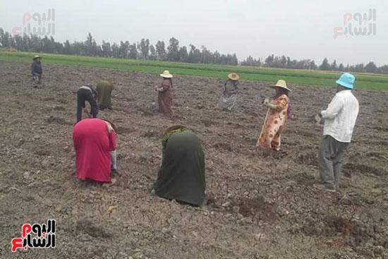 زراعة-محصول-اليقطين-لأول-مرة-في-مصر-(7)