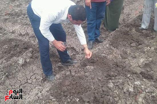 زراعة-محصول-اليقطين-لأول-مرة-في-مصر-(5)