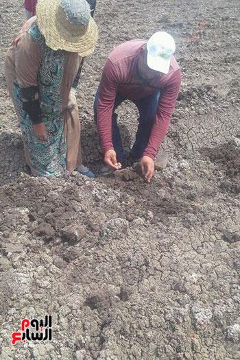 زراعة-محصول-اليقطين-لأول-مرة-في-مصر-(3)
