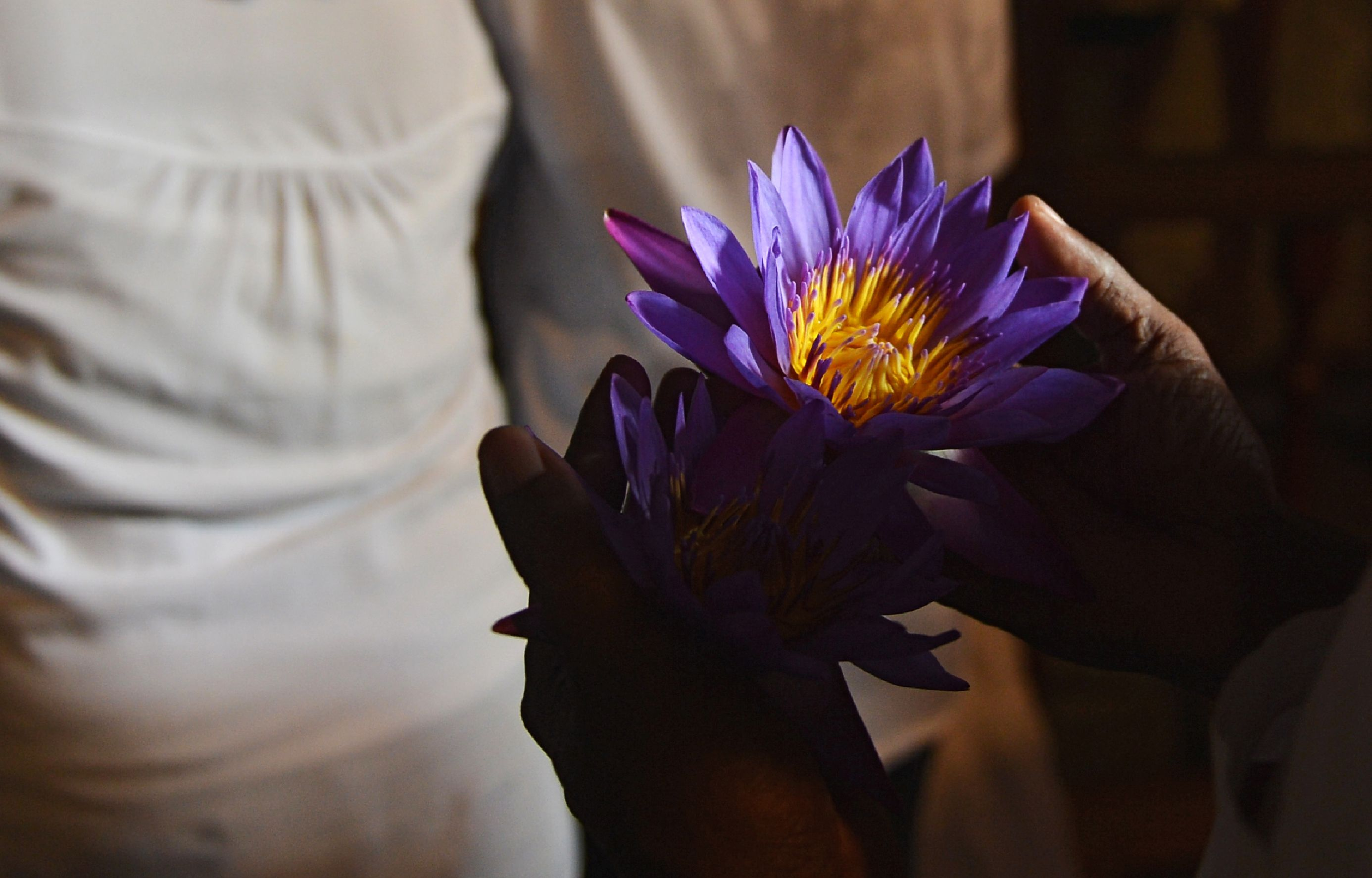 زهرة البنفسج فى يد أحد المصلين بذكرى ميلاد بوذا