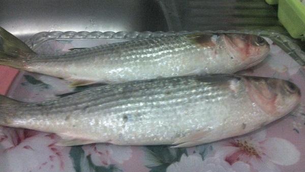 أسماك البورى بعد غسلها جيداً وتصفيتها من أى مياه