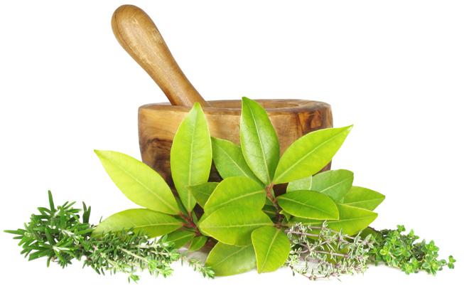 استخدم الطب البديل فى علاج مرض الكلى بالأعشاب اليوم السابع