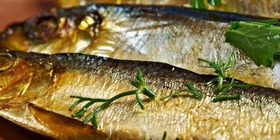 سمك الرنجة2