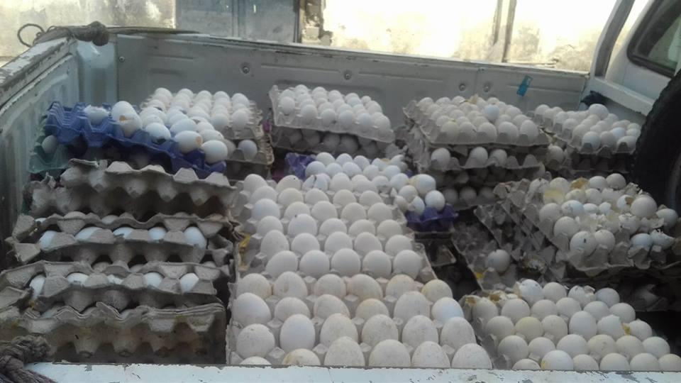 1- ضبط بيض فاسد بكفر الشيخ
