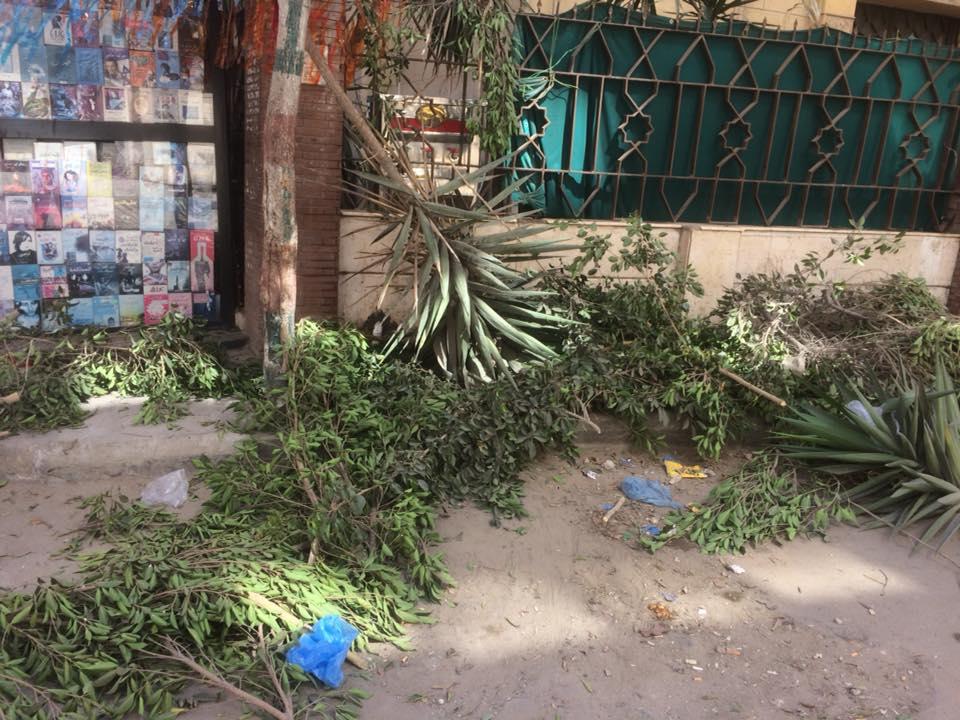 128646-قطع-الأشجار-فى-الإسكندرية-(1)