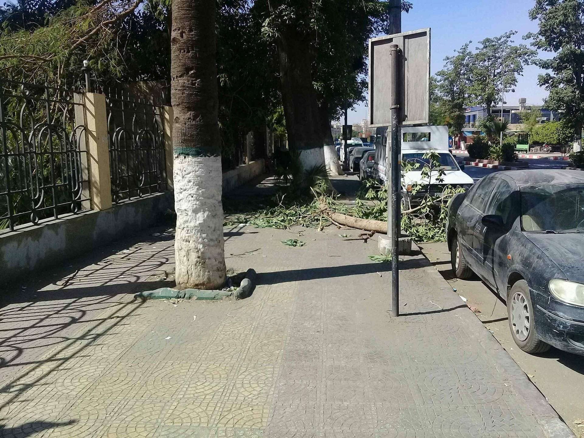 أفرع الأشجار فى الشوارع