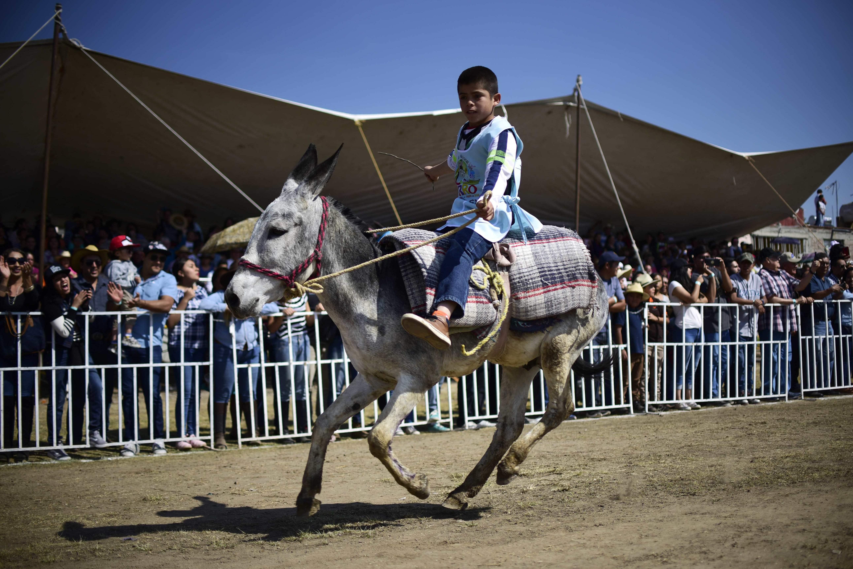 طفل يشارك بحماره في السباق